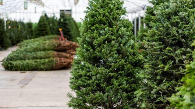 christmas-tree-store